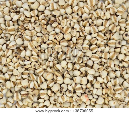 Millet rice millet grains background texture .