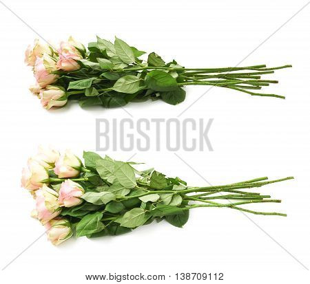 Pile of multiple white roses isolated over the white background, set of two different foreshortenings