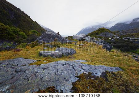 Rocks covered with yellow mosses. This is a vantage point overlooking Tasman river.