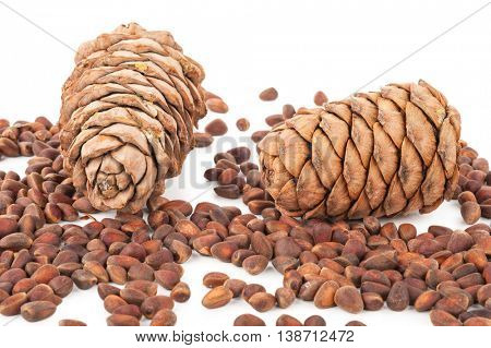 Cedar cones