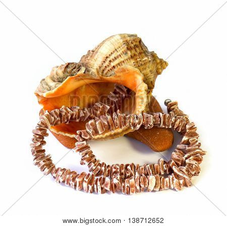 coral necklace large shell on the rock on white background