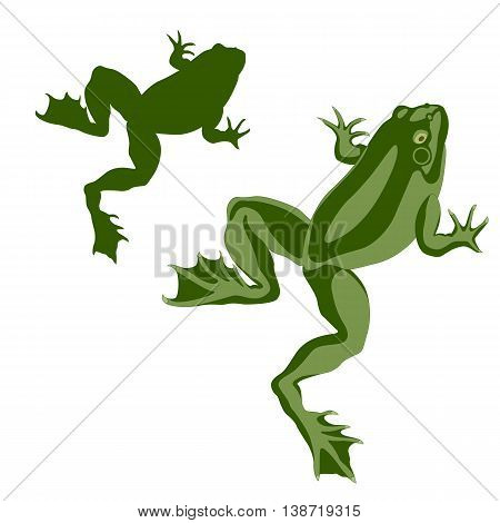 amphibian frog green color realistic vector illustration set