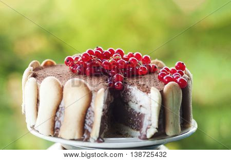 Ice cream tiramisu cake with cranberries on top against green vivid background. Focus on the fruits