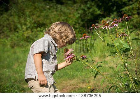 Cute little boy smelling Echinacea purpurea flowers in the garden