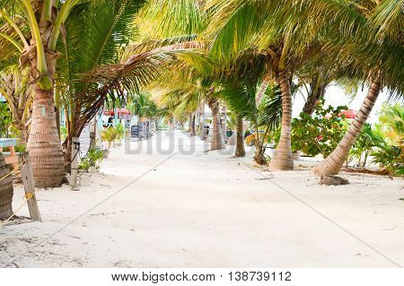 The white sand alley shaded by the palm trees by the Caribbean beach at Caye Caulker island Belize