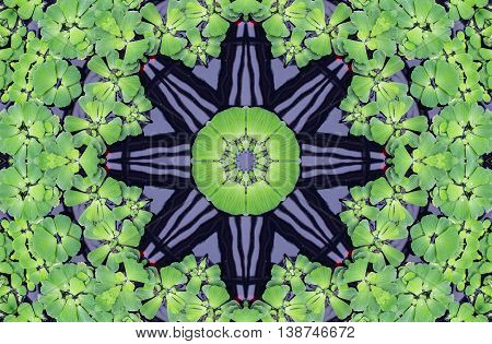 Green kaleidoscope pattern with water cabbage (lettuce)