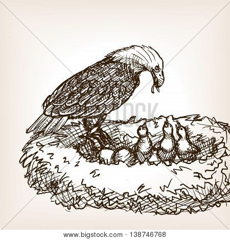 Eagle feeding baby birds sketch style vector illustration. Old hand drawn engraving imitation.