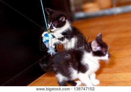 sweet little baby kittens playing together with a toy