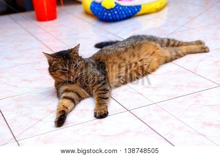Beautiful Stripped Cat Lying Down On A Marmor Floor.