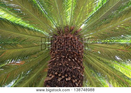 Summer background of palm tree illuminated by the sun