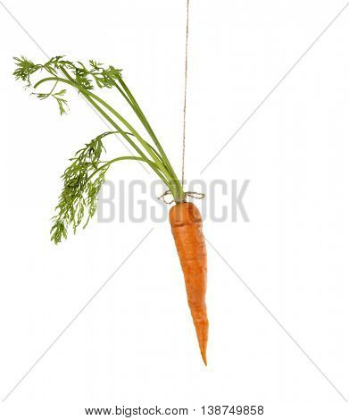 Hanging carrot, isolated on white