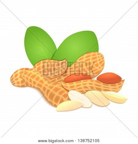 Vector illustration peanut nut. A handful of shelled peanuts nuts in shell and shelled, leaves.