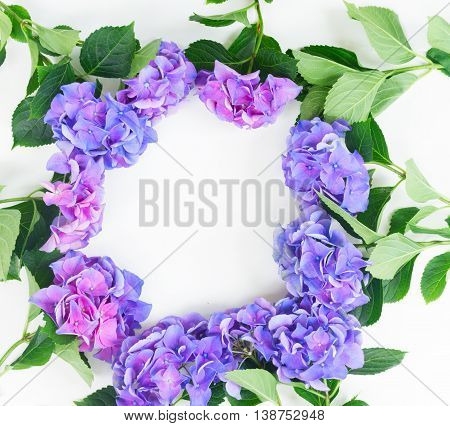 blue and violet hortensia flowers frame pappern on white background