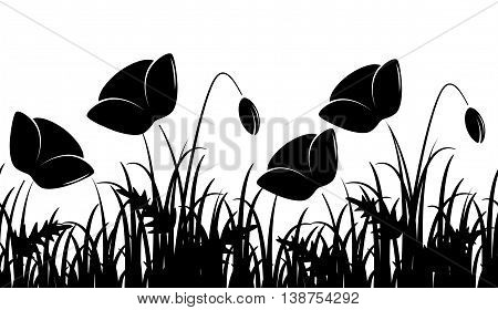 vector seamless border with corn poppy in grass isolated on white background