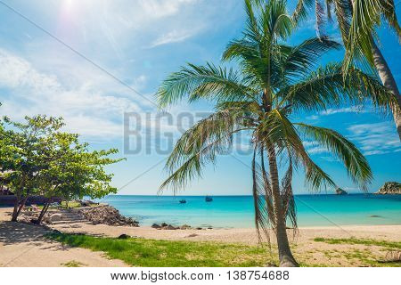 Palm Trees On Luxury Exotic Beach In Tropical Island