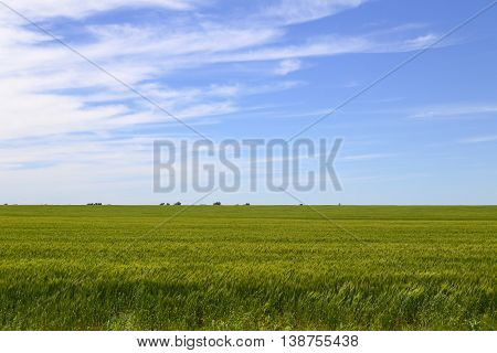 Cornfield And Sky