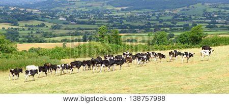 Beautiful farmland Axe Valley in East Devon England