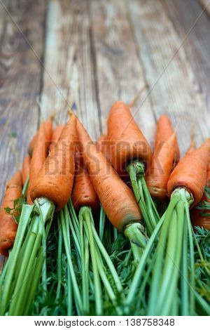 Closeup of bunch of fresh carrots with green leaves over rustic weathered wooden background with copy space