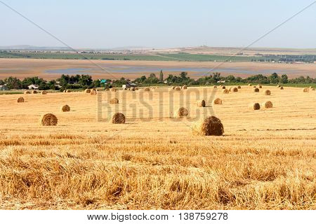Summer Field with Hay Bales as background.