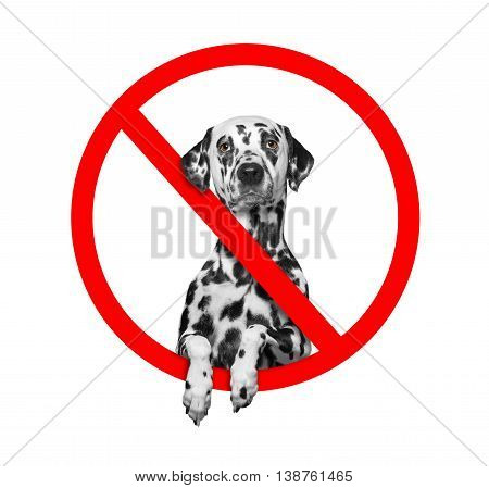forbidden sign with the dog -- isolated on white background