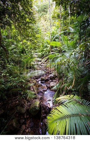 The famous Jindalba Boardwalk thru ancient rainforest in the Daintree region of Queensland, Australia