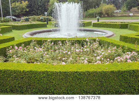 evergreen boxwood (Buxus sempervirens) hedge adorn a rose garden