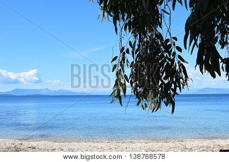 Tree branches and leaves hanging on the beach in front of the sea in Corfu