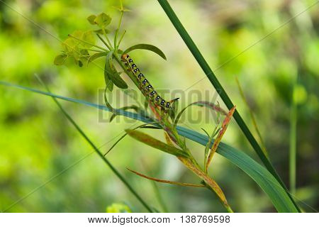 A caterpillar creeps on a green plant