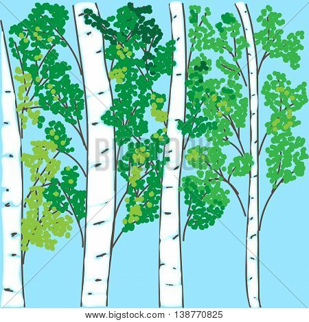 hand-drawing the birch grove on a blue background