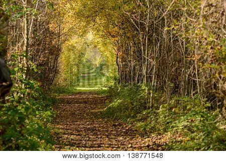 Golden colored autum forest with lane with foliage