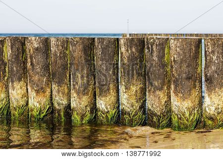 Wooden breakwaters that are covered with green seaweed can be seen at the edge of the beach in Kolobrzeg in Poland
