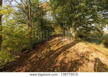 Golden colored autum lane nature with foliage