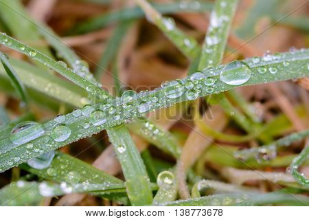 Close up from moist and wet grass