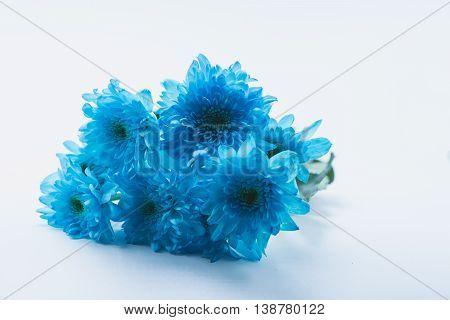 bouquet of blue daisy flower navy blue daisy flower on white isolate background text word on background daisy flower beautiful daisy lovely daisy pretty daisy fresh daisy