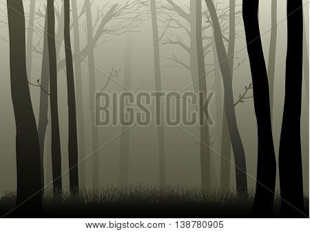 Vector illustration of misty and dark woods