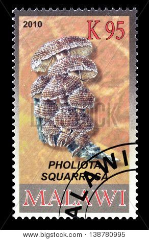 MALAWI - CIRCA 2010 : Cancelled postage stamp printed by Malawi, that shows Shaggy scalycap.