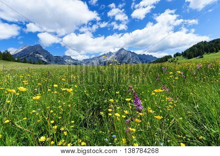 Beautiful mountain landscape in the Alps with wild flowers and green meadows. Walderalm Austria Tyrol.
