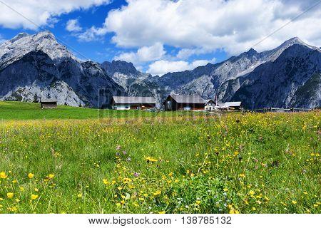 Summer Alps with beautiful yellow flowers near Walderalm. Austria Tirol.