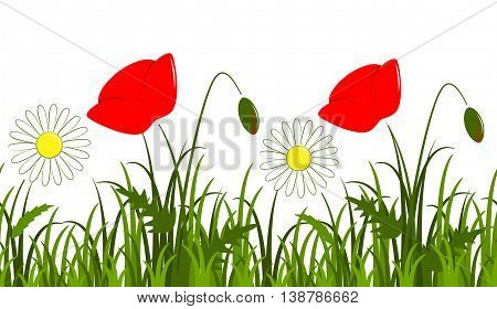 vector seamless border with daisies and corn poppy in grass isolated on white background