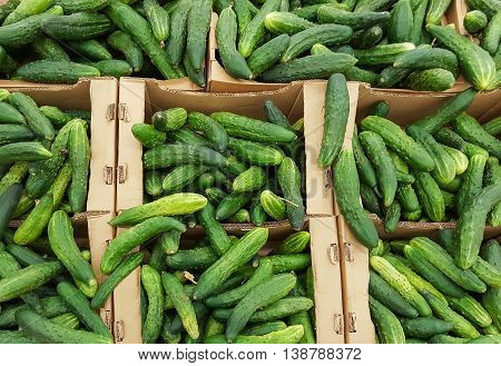 green cucumbers in boxes , there are pictures of this series