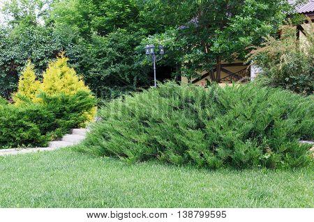 Beautiful landscape design, garden with evergreen bushes, fir trees, spruces and shrubs in sunlight. Modern landscaping. Summer garden or park design.