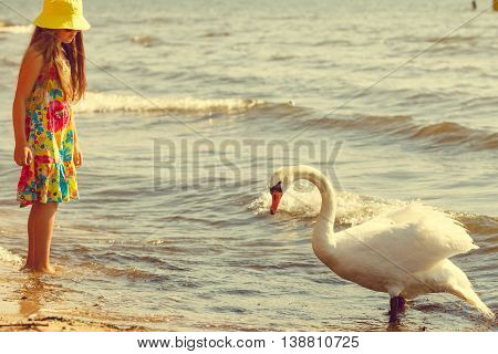 Girl Playing With Adult Swan.