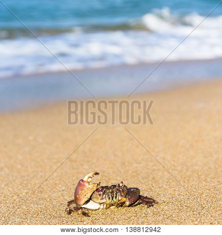 Cute Animal On the Shore