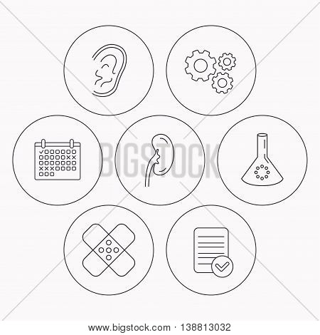 Lab bulb, medical plaster and ear icons. Kidney linear sign. Check file, calendar and cogwheel icons. Vector