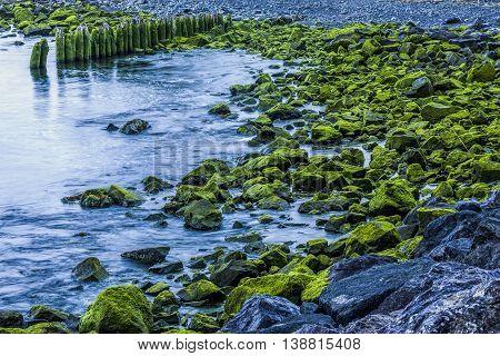 Moss covered rocks along the shoreline on first beach in La Push Washington.