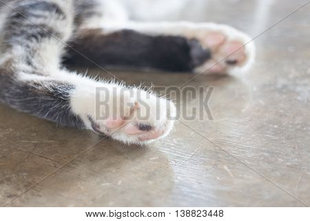 Relaxing cat's pawns at home stock photo
