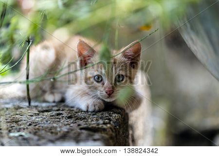 Young red cat first outdoor experience close up