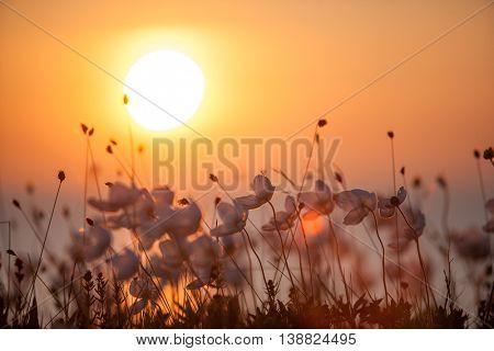 summer flowers against setting sun
