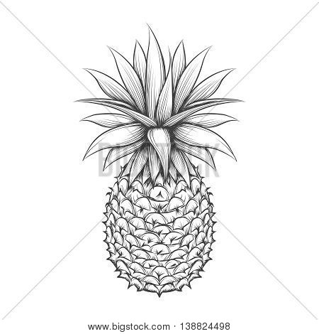 Hand drawn pineapple. Vector pineapple fruit black sketch icon