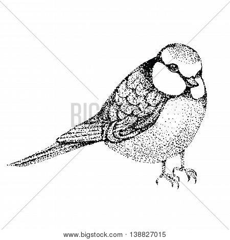 vector illustration bird blue tit. bird in graphic style